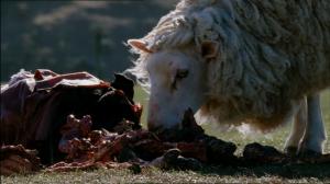Black Sheep Horror Sheep 10