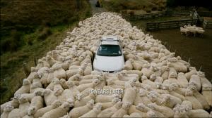 Black Sheep NZ taffic jam